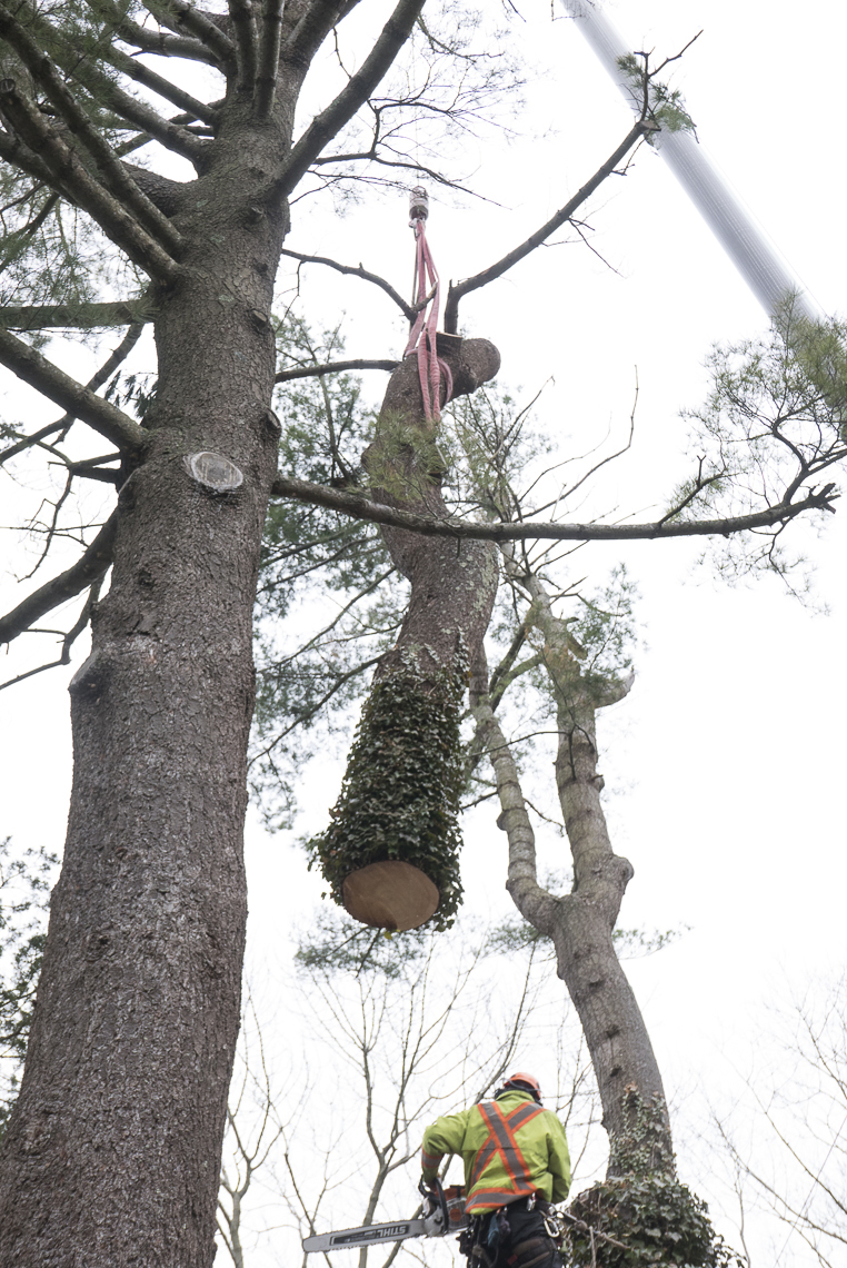 cottage_tree_removal_007