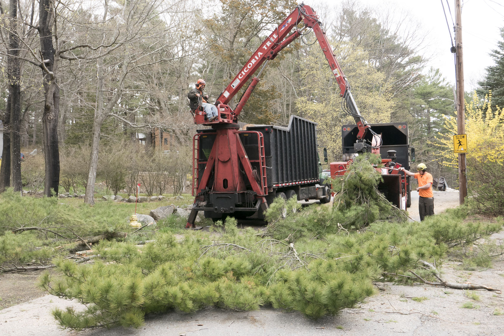 cottage_tree_removal_012
