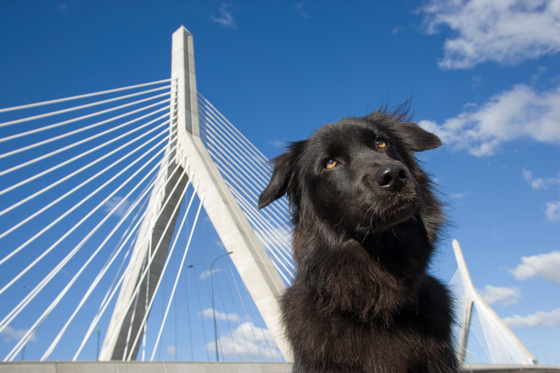 tammy_zakim_bridge_2_01.jpg